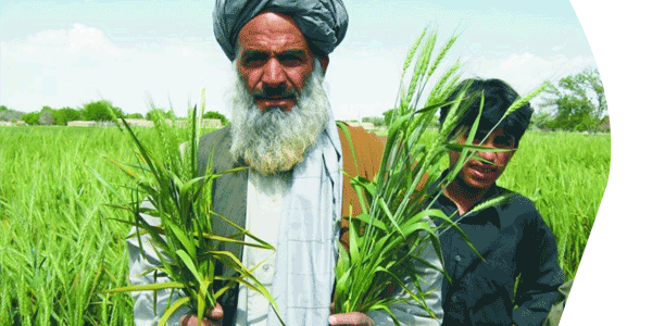 Image of a Middle Eastern man and son standing by crops
